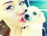 imagen Miley Cyrus tiene nueva mascota